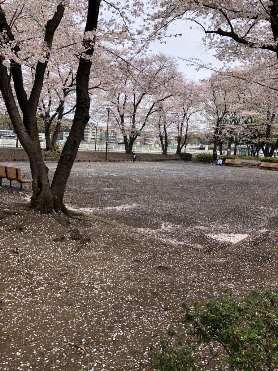 桜が満開に!!